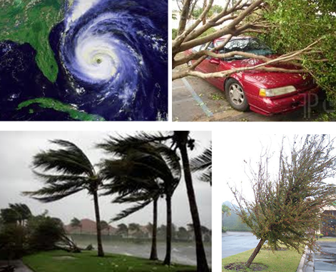 Preparing Trees for Hurricane Season